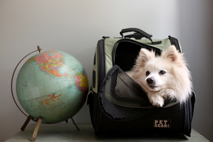 Best Tips When Traveling With Your Dog