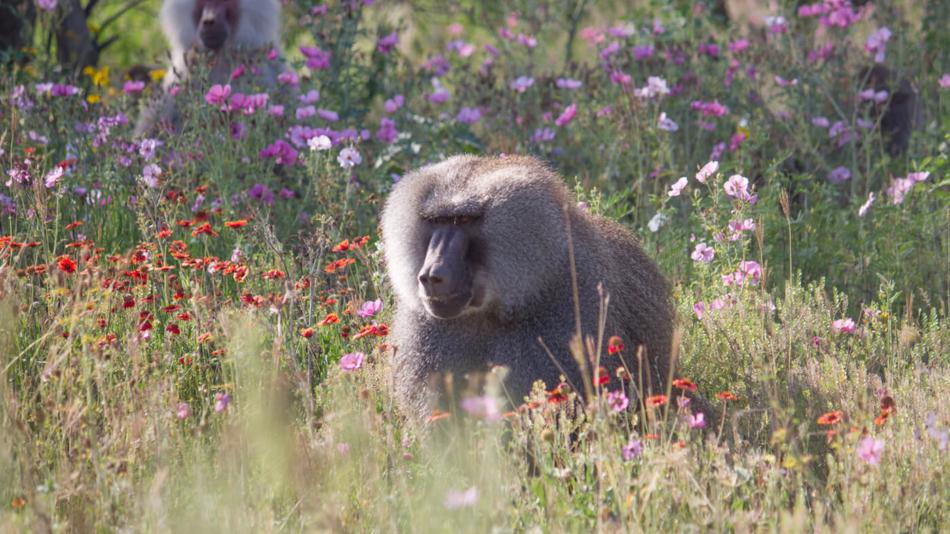 born free primate sanctuary