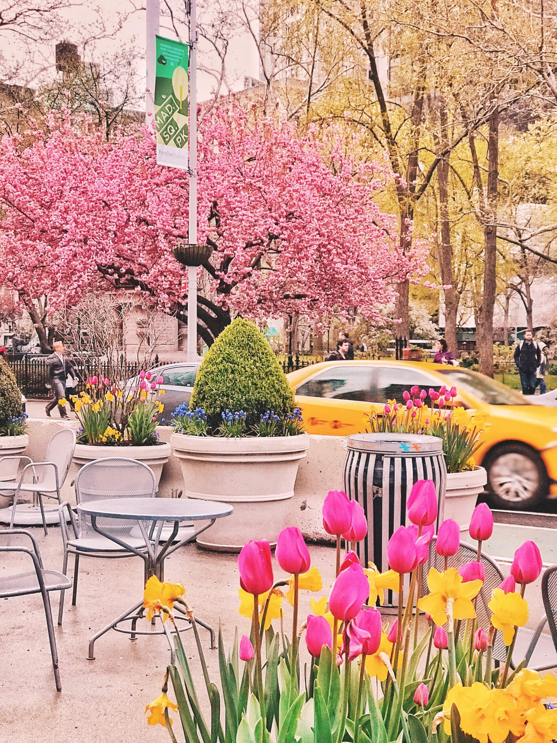 spring nyc in bloom