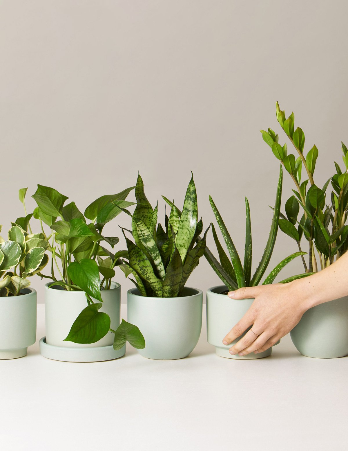the sill plant subscription box last minute christmas gifts